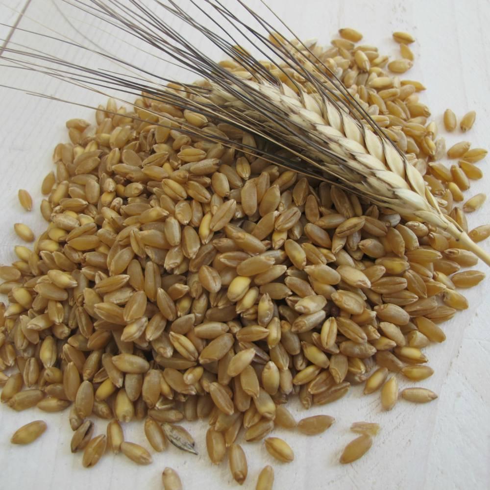 Semola di grano duro antico - Senatore Cappelli - INTEGRALE - L oro ... 7431c3890f27